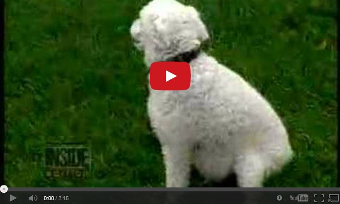 Narcolepsie bij honden